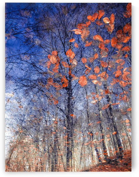 Autumn Leaves II by 1x