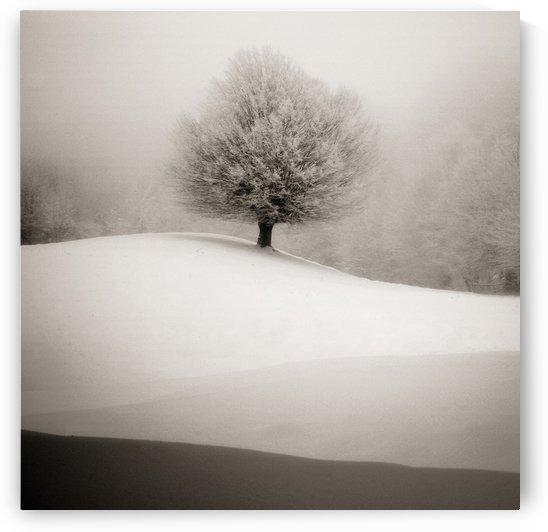 winter degradee by 1x