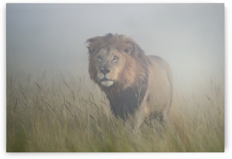 King in the mist by 1x