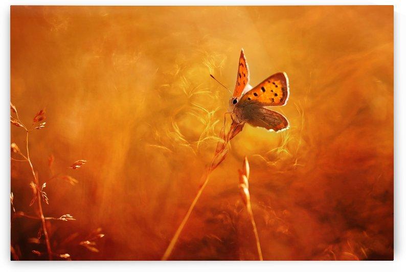 Golden wings by 1x