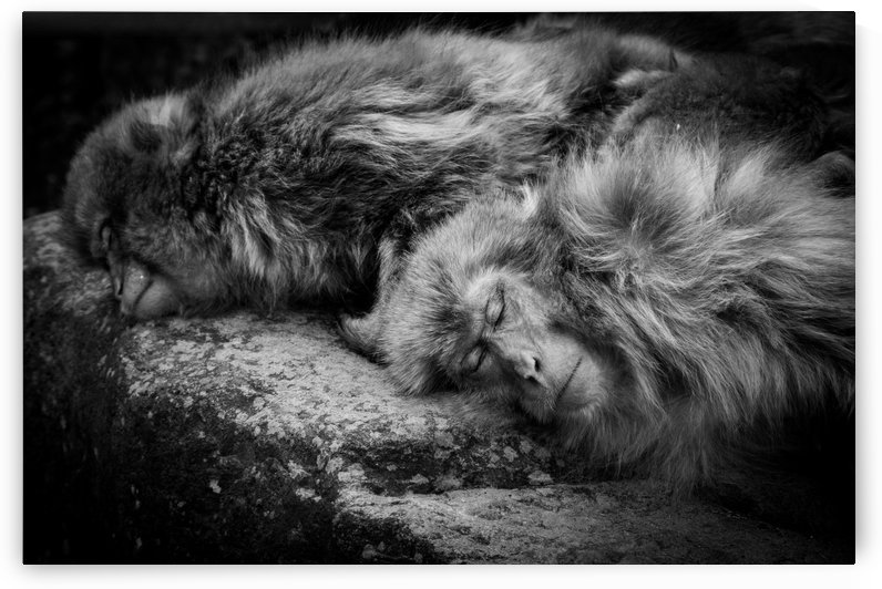 Sleeping by 1x