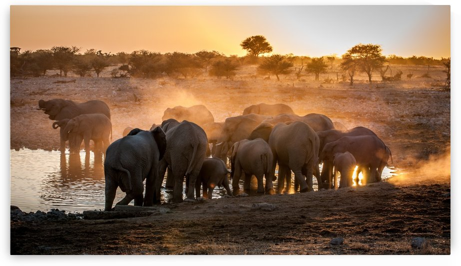 Elephant huddle by 1x