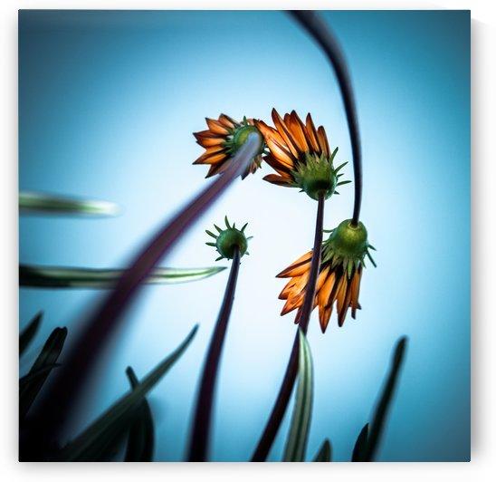 FlowerLove by 1x