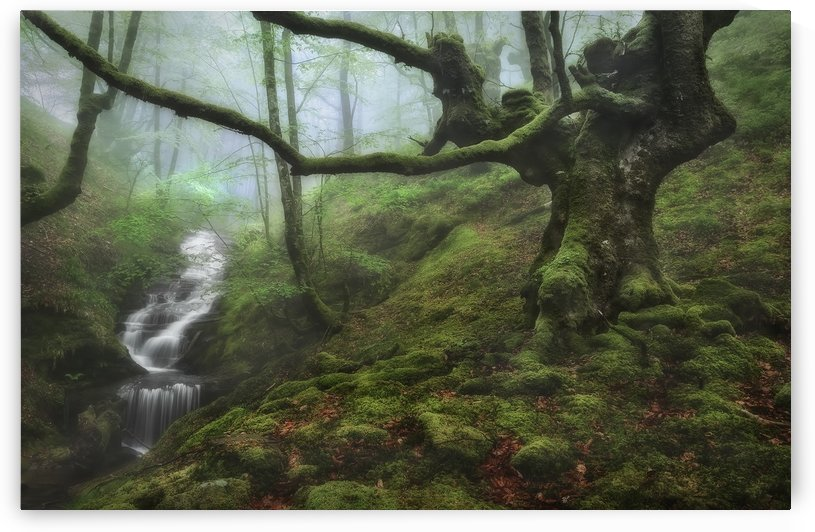The Enchanted Forest by 1x