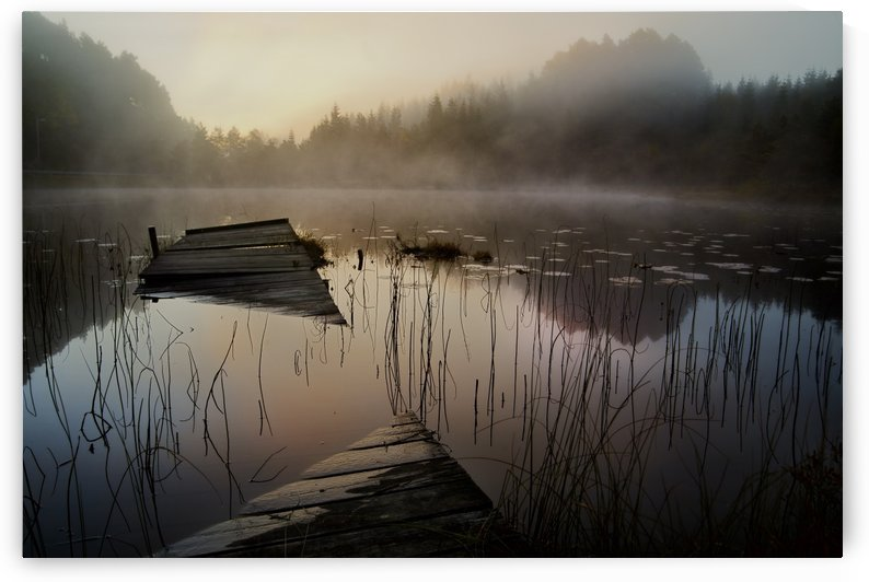 In the misty morning by 1x