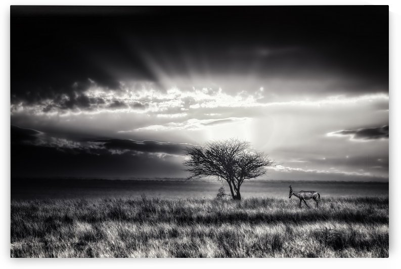 sunrise with hartebeest by 1x