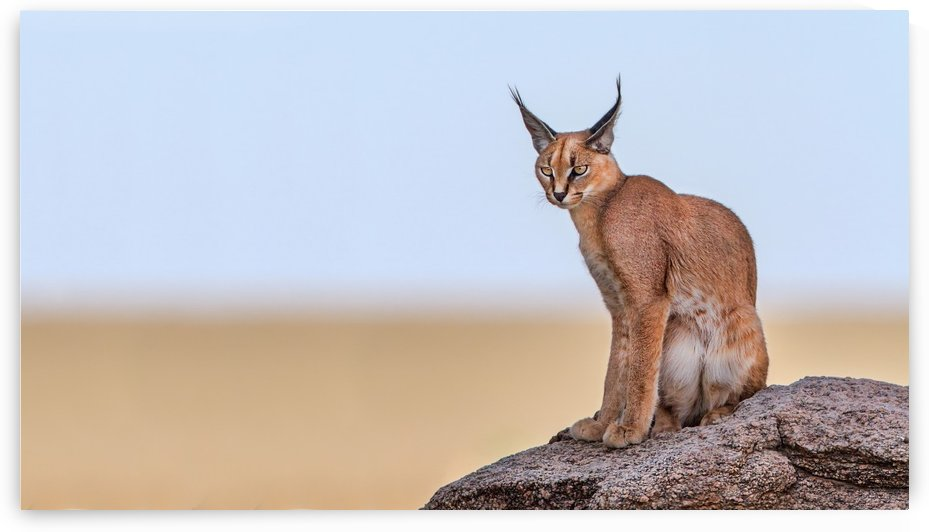 Caracal On Mars by 1x