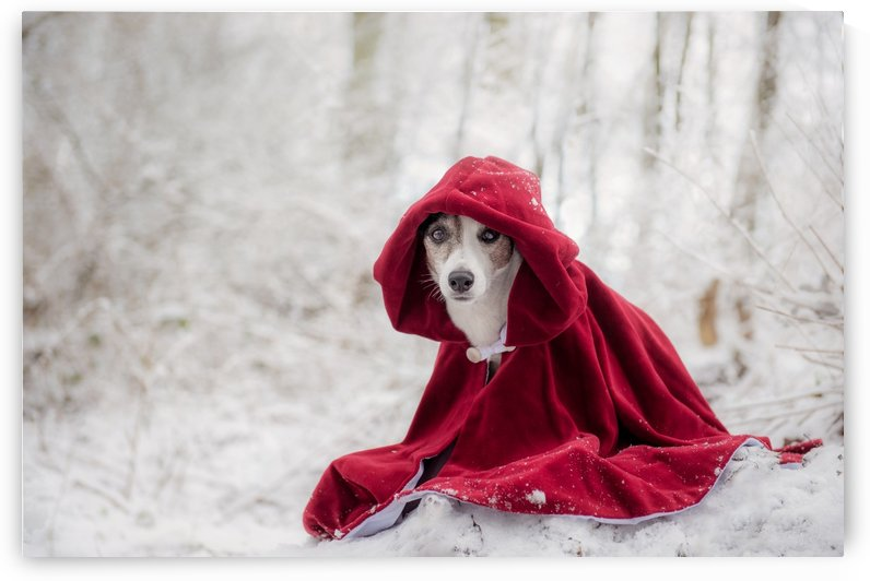 Little Red Riding Hood in Winter by 1x