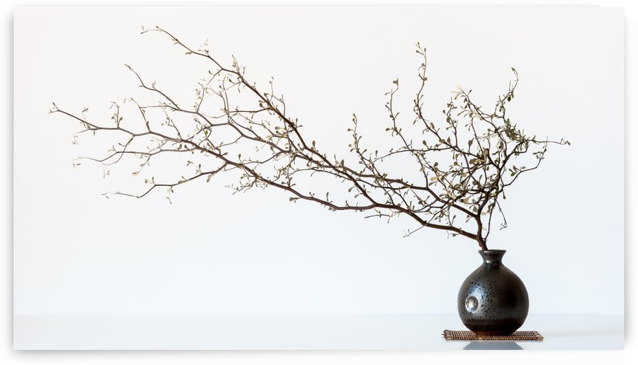 Vase And Branch by 1x
