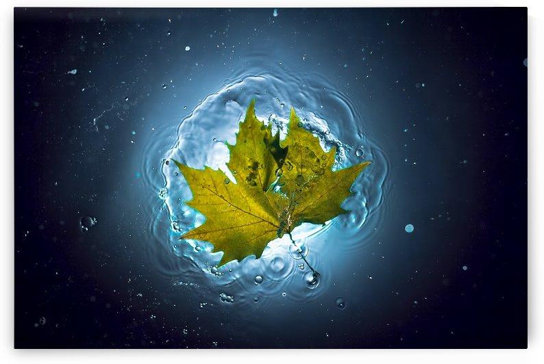 Cosmic Autumn by 1x