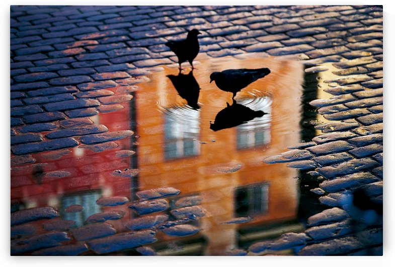 Pigeons by 1x