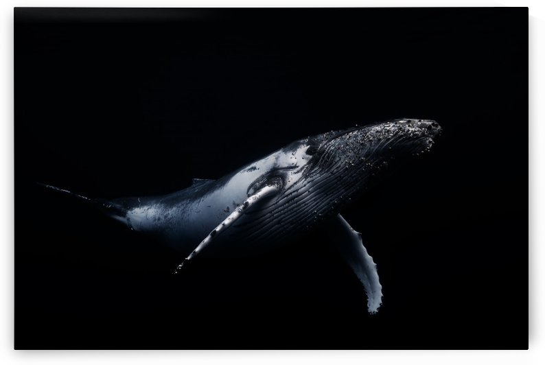Black & Whale by 1x