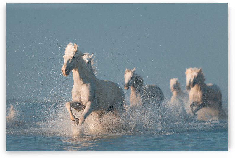 Angels of Camargue by 1x
