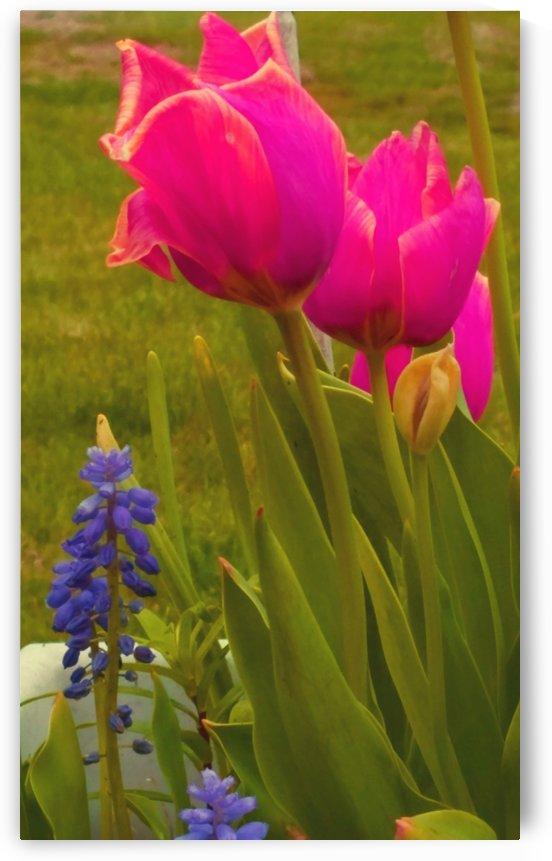 Floral Delight by Kimberlee Ingram