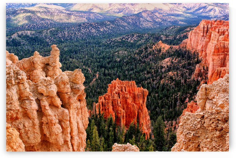 bryce national park  by tom Prendergast