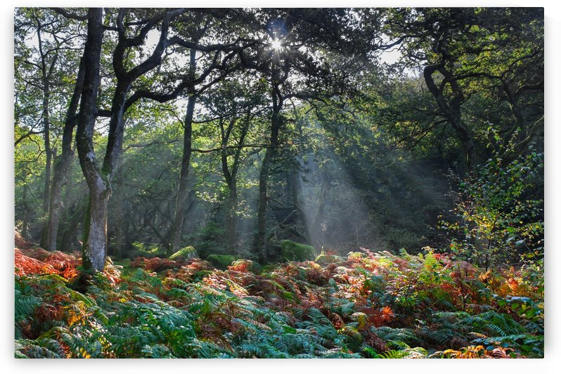 Dewerstone Woods by Andrew Turner