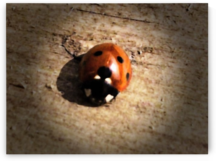 Lady Bird Bug by Alex Corkery