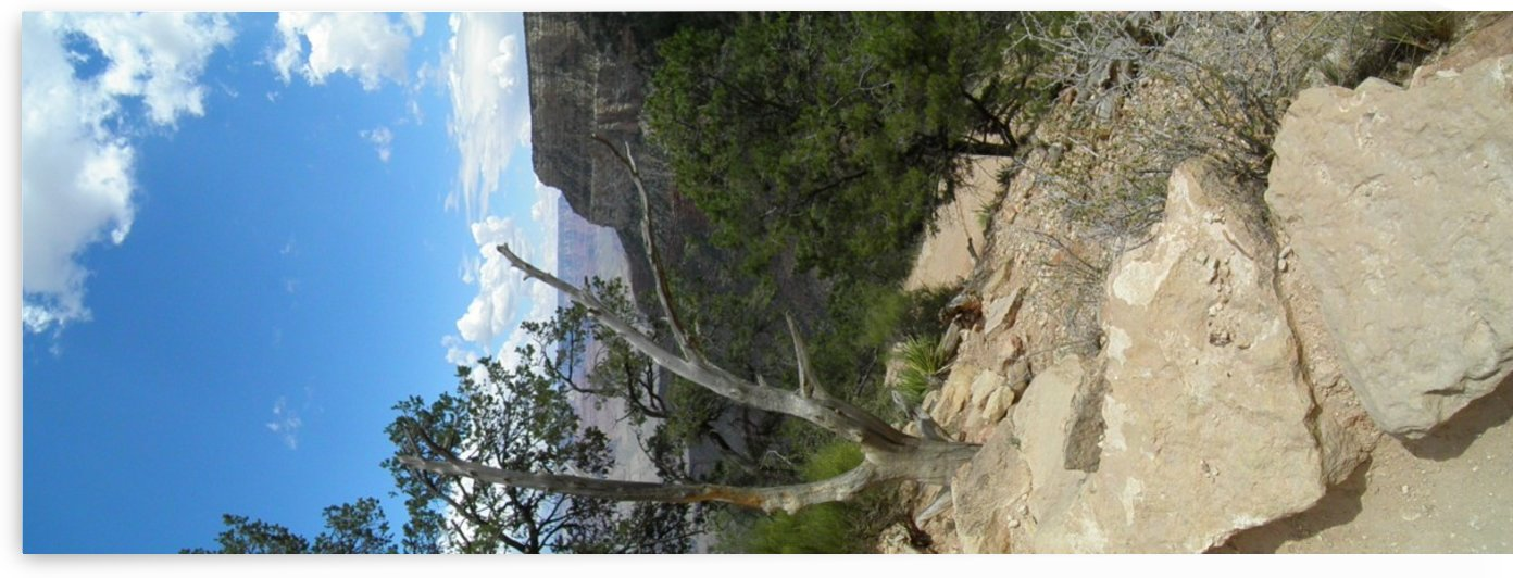 Grand Canyon vertical panoramic by Laura Jeanne Reck Gayner