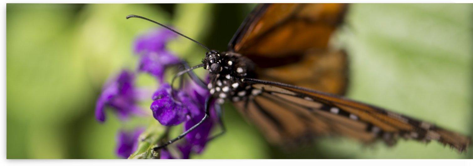 Butterfly Eye by Saige Eitman