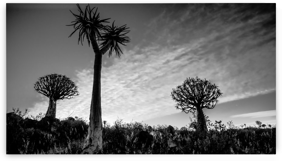 Quiver Trees by Jacques Jacobsz