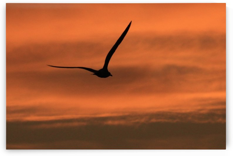 Sunrise seagull by Andy Jamieson