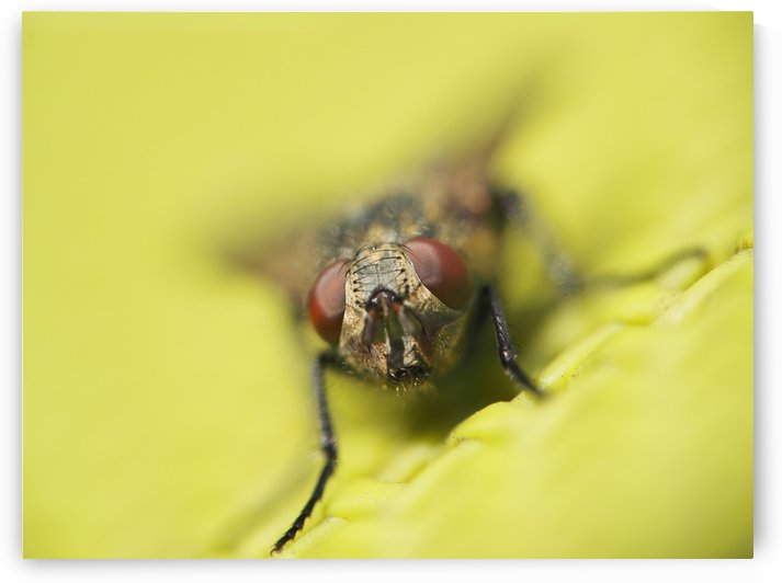 The Fly! by GSPhoto