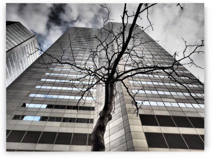 Street Tree! by GSPhoto