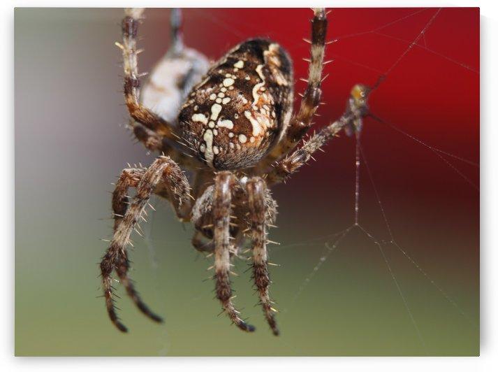 Spider by GSPhoto