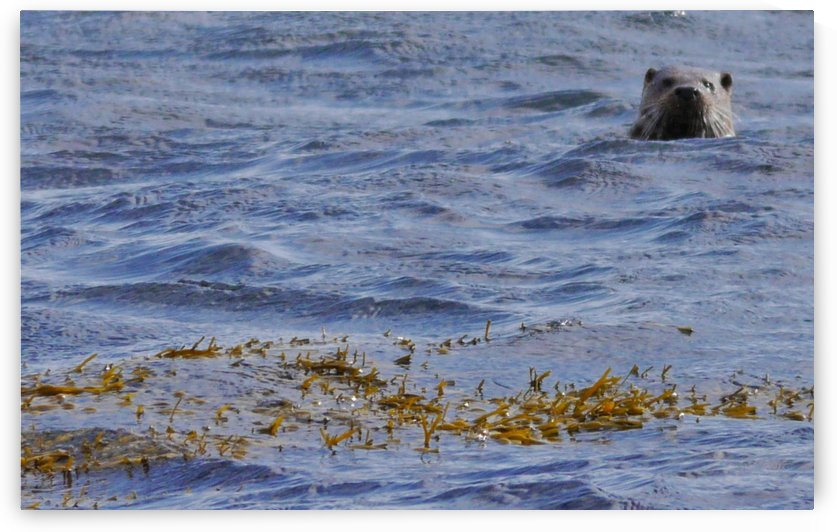 Watching Otter by Andy Jamieson
