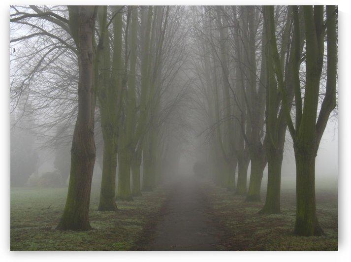 Misty avenue by Andy Jamieson