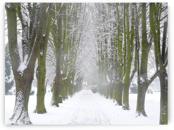 Snowy Avenue by Andy Jamieson