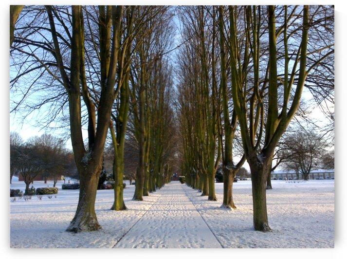 Calm snow Avenue by Andy Jamieson