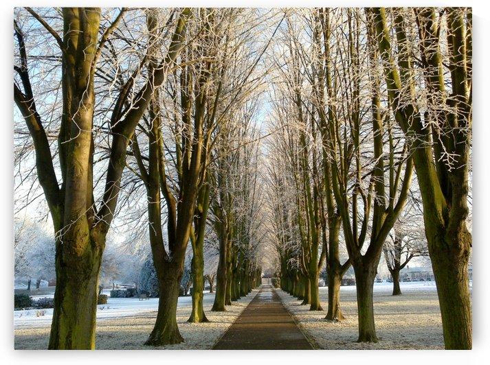 Frosty Avenue by Andy Jamieson