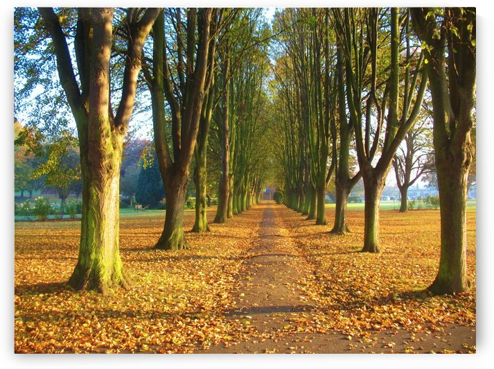 Autumnal Avenue by Andy Jamieson