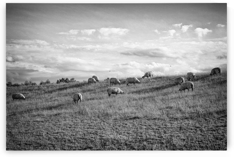 A pastoral scene. by David Kracht