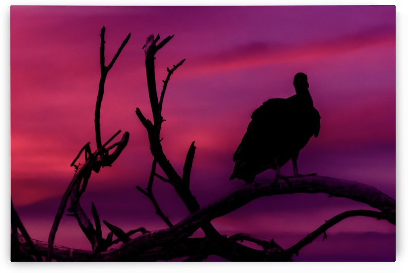 Vultures at Top of Tree Silhouette Illustration by Daniel Ferreia Leites Ciccarino