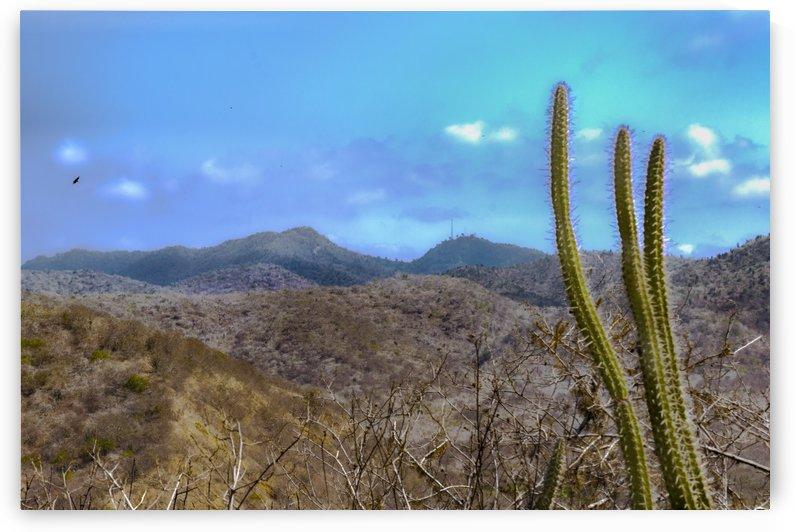 Landscape Scene Machalilla National Park Ecuador by Daniel Ferreia Leites Ciccarino