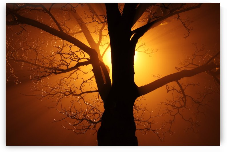 abstract sun tree by STOCK PHOTOGRAPHY