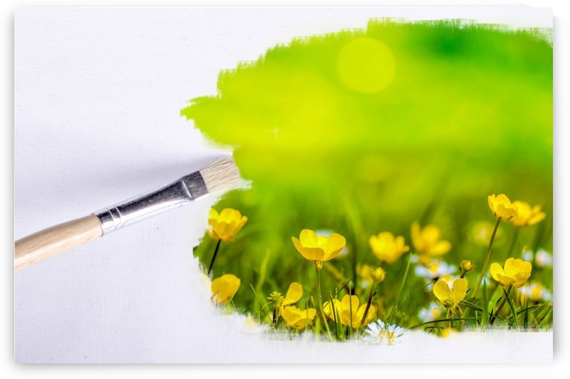 Paintbrush Outdoor Flower Flowers Sunlight by STOCK PHOTOGRAPHY