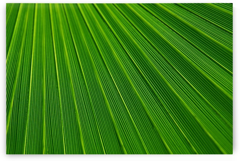 abstract green lines by StockPhotography