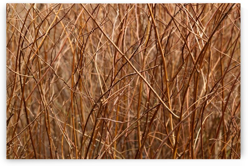 Abstract Background Branch Brown Color Flora by STOCK PHOTOGRAPHY