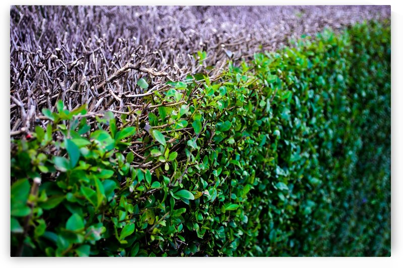Abstract Background Bush Close Ecological Ecology by StockPhotography