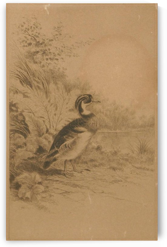 A solitary duck by William de la Montagne Cary