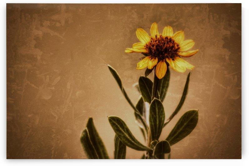 Golden Flower by Digitalu Photography