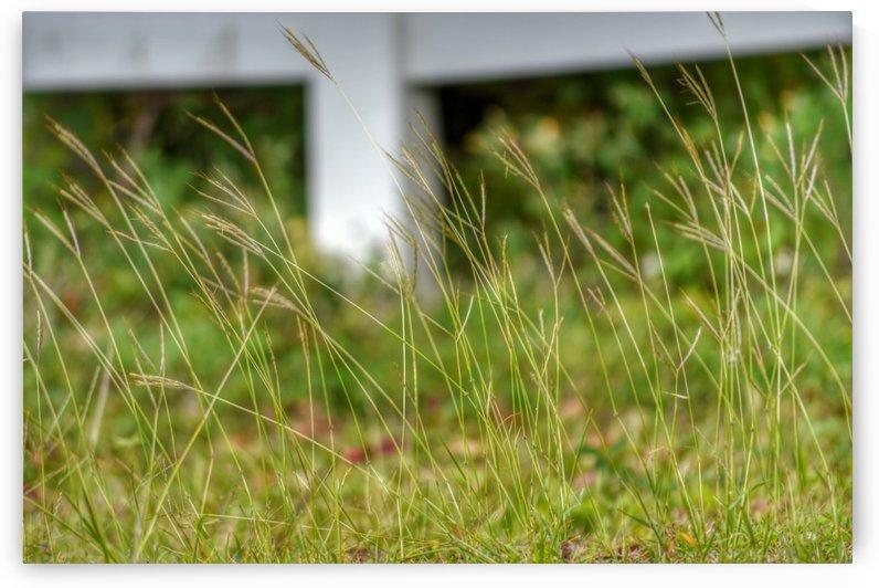 Tall Grass by Digitalu Photography