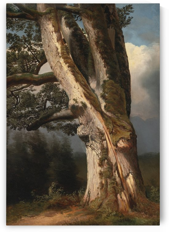 An oaktree trunk by Alexandre Calame