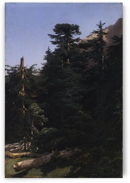 Study of fir trees by Alexandre Calame
