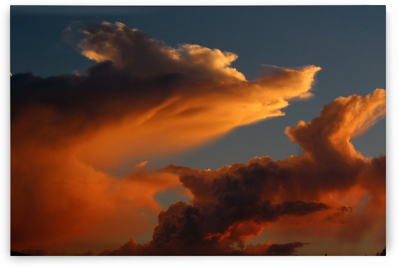 Coyote Skies by Meridith Heimer