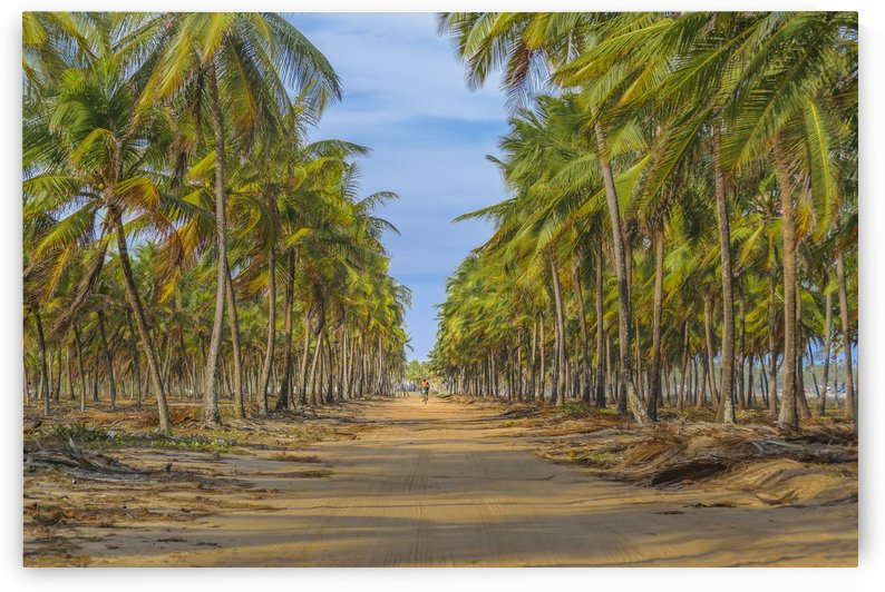Earth Topical Road Porto Galinhas Brazil 2 by Daniel Ferreia Leites Ciccarino