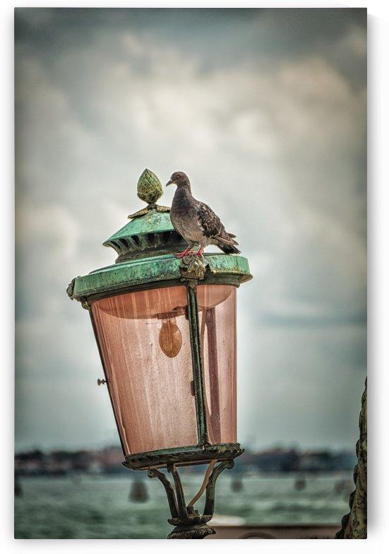 Venice by Andrea Spallanzani
